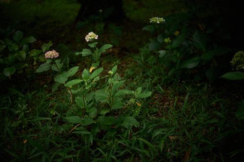 Nikon_3.jpg